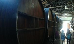 Mendoza vins bodega (1)