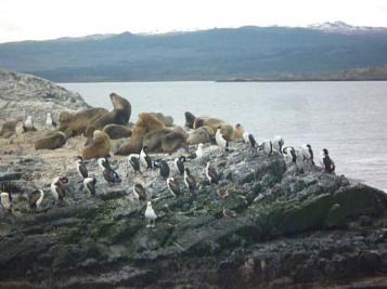 Lions de mer et pingouins